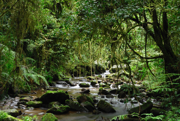 What biome is Madagascar, and what is its characteristics and ...